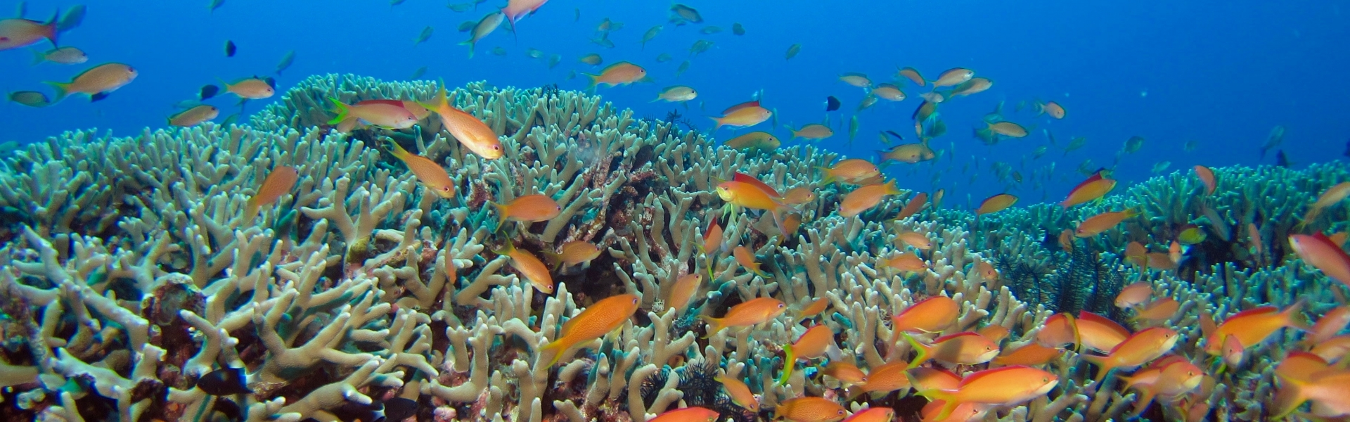 Fish swimming among coral