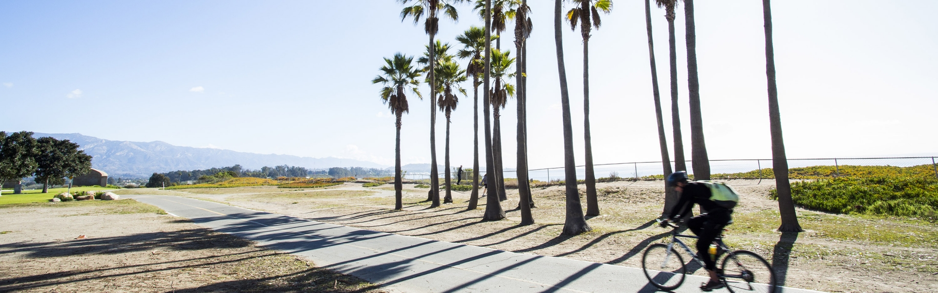 Bicyclist on path by palm trees