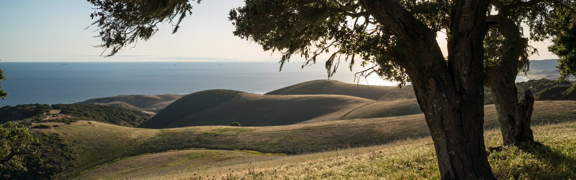 Coast Live Oak stand overlooking Pacific