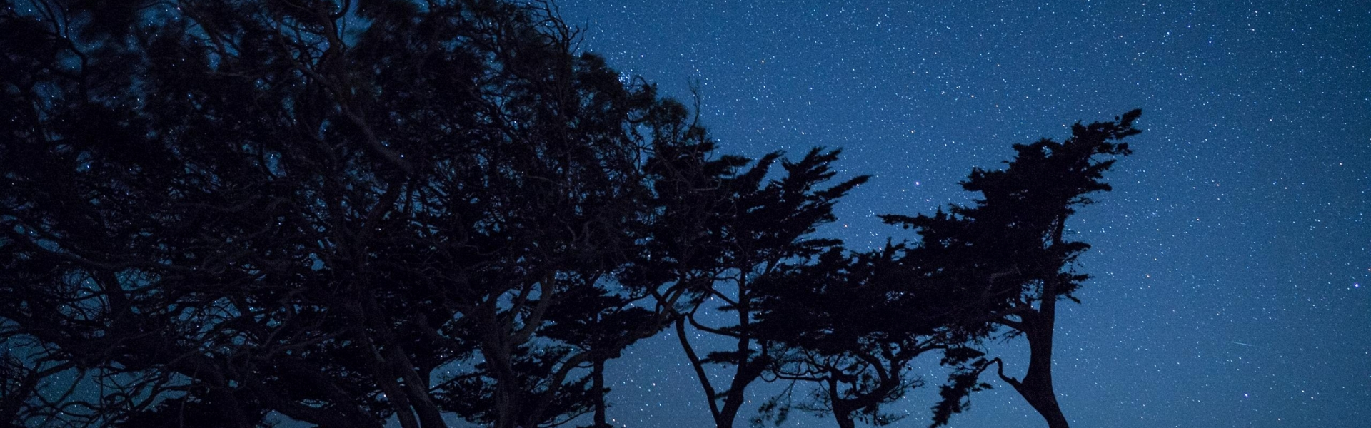 Night sky with cypress tree silhouettes