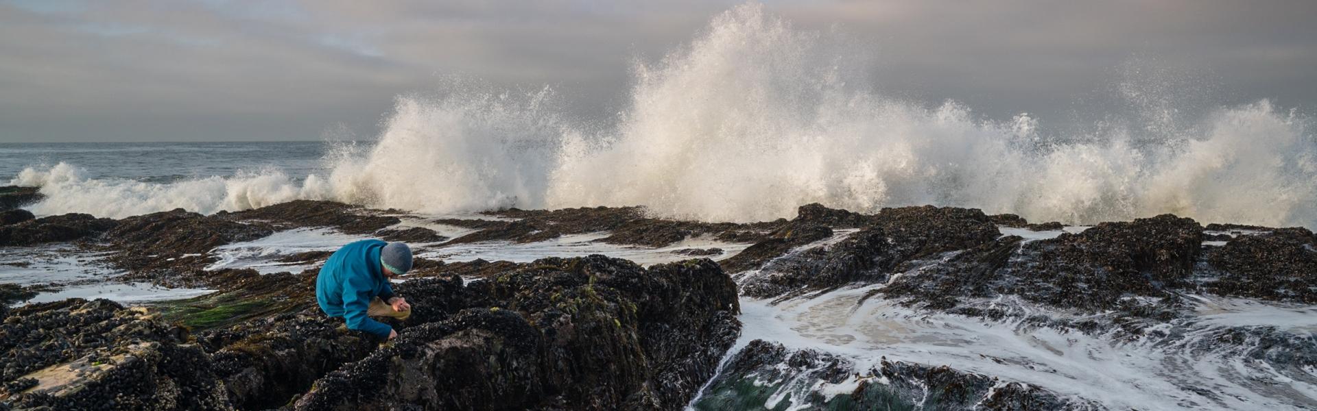 Scientist kneels on rock in tidal area