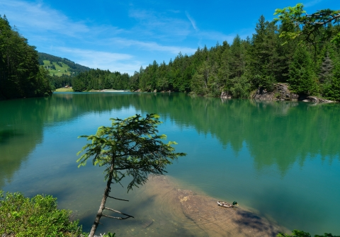 Green lake surrounded by pine trees