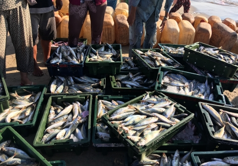 Crates of fish on a fishing boat