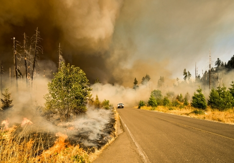 A wildfire burns near a forest road