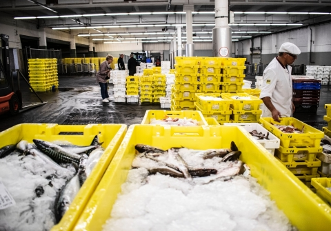 Yellow crates of fish on ice