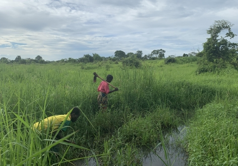 Rural Zambian farmers working in a wet field