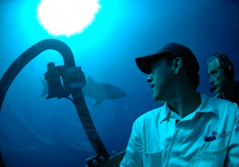 Maurcio Hoyos looks at a shark from inside a submersible vehicle