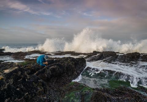 Person examining tide pool along rocky shore