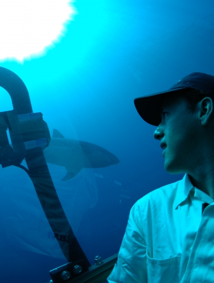 Mauricio Hoyos looks at a shark from inside a submersible vehicle