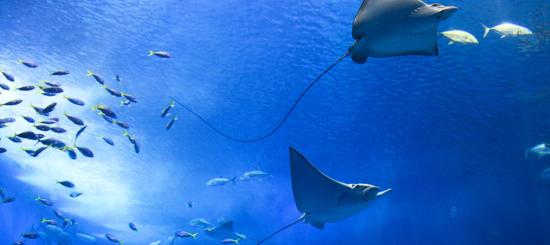 Ocean full of life, fish and manta ray