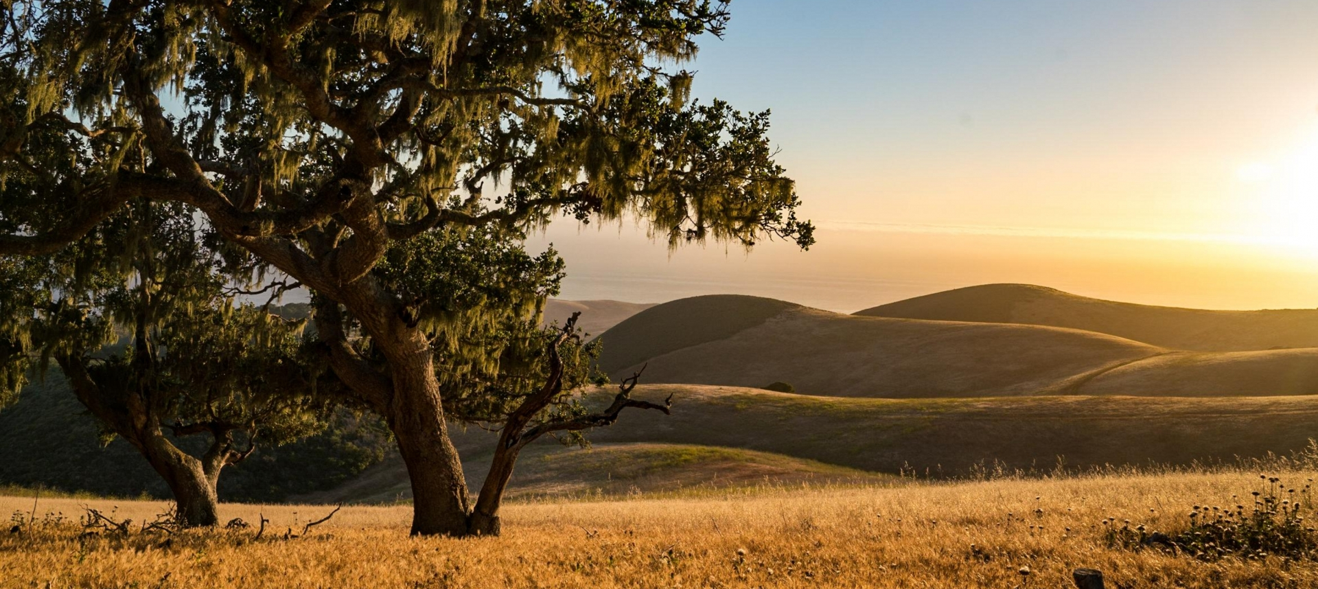 Large oak tree landscape with rolling hills and clear sky