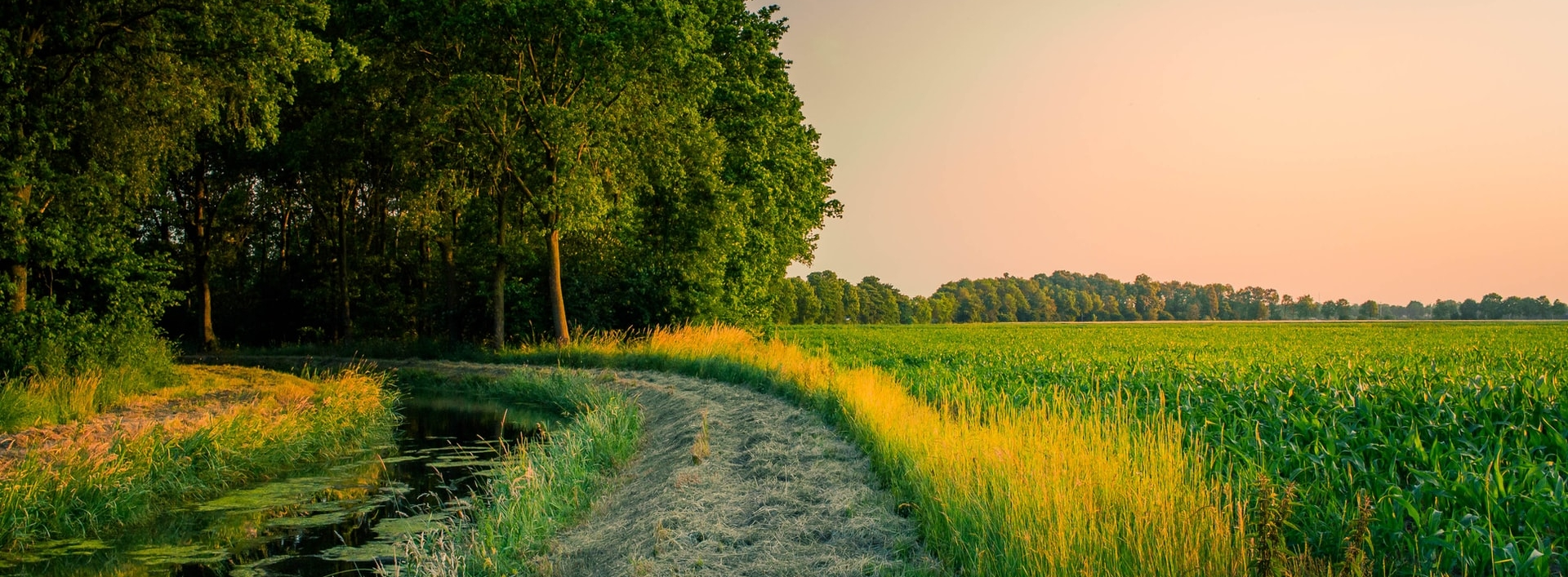 A dirt road next to a field at sunset