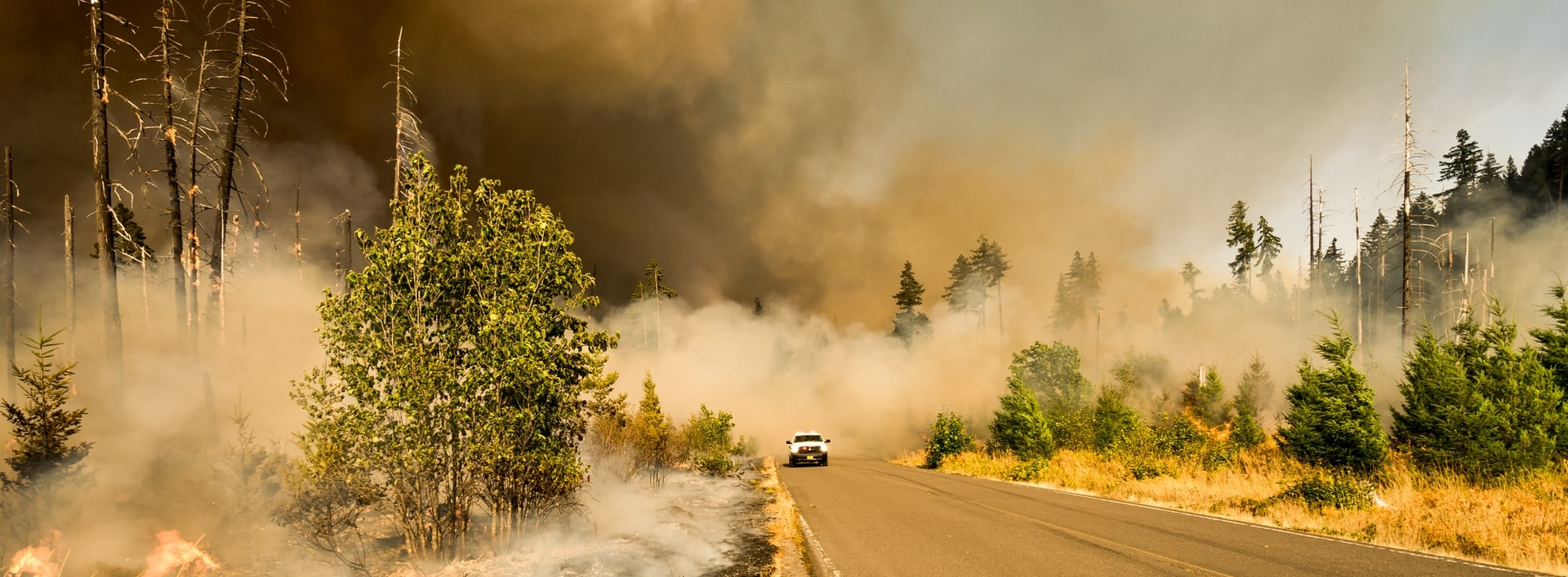 A wildfire burns next to a forest road