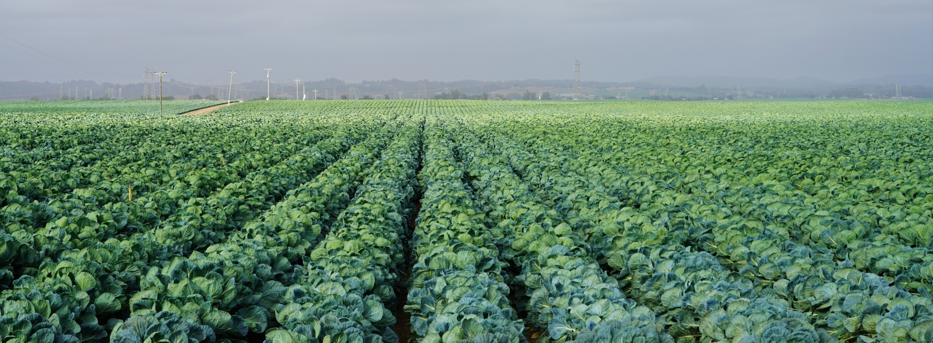 Rows of crops in a field, credit Peter Gonzalez