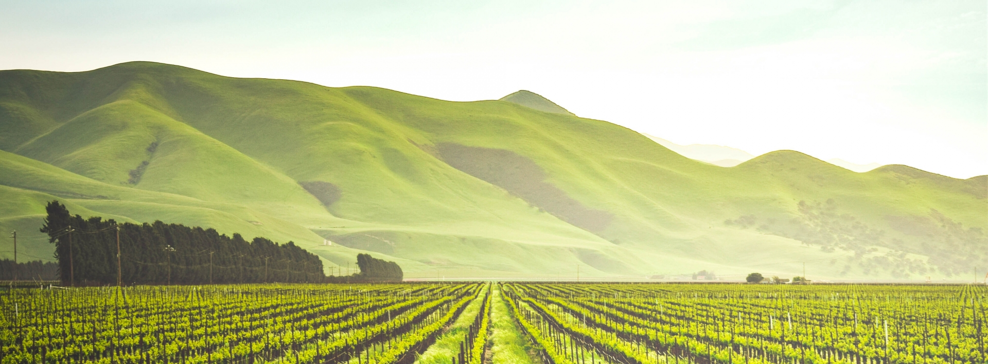 Green crop rows with a scenic backdrop of hills and sky
