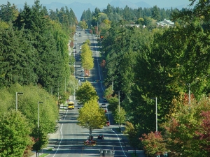 boulevard surrounded by trees