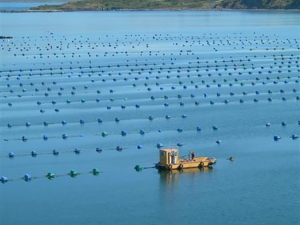 Offshore mussel farm and boat