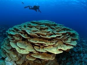 Underwater photo of coral reef